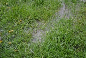Water Drainage Gretna NE